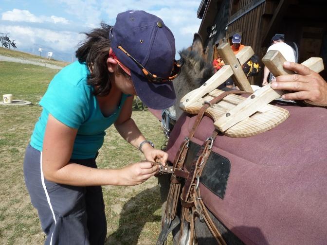 Randonnée avec les ânes : une bonne idée pour les enfants cet été !