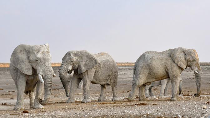 Circuit en Namibie : un périple hors du temps