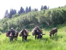 47_Rando ânes